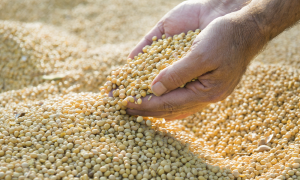 Soybean Association